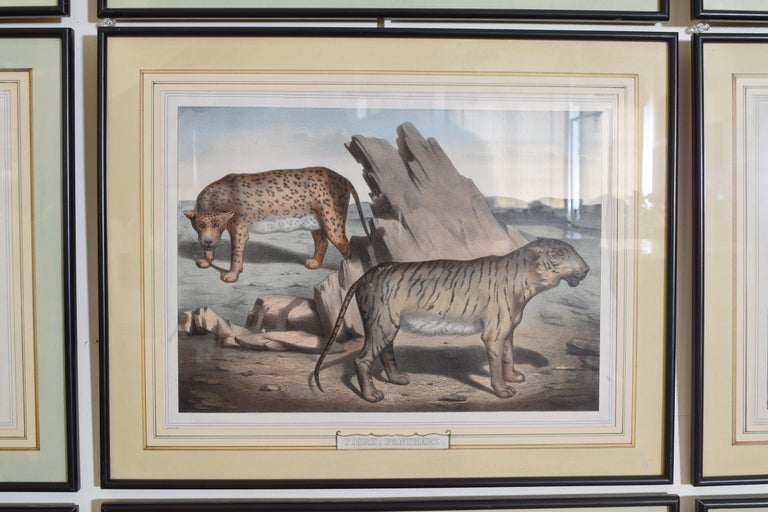 Group of 12 French Hand Colored Framed Engravings of Animals in Habitat For Sale 6