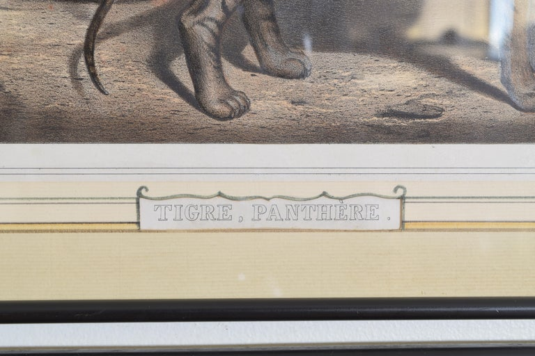Group of 12 French Hand Colored Framed Engravings of Animals in Habitat For Sale 7