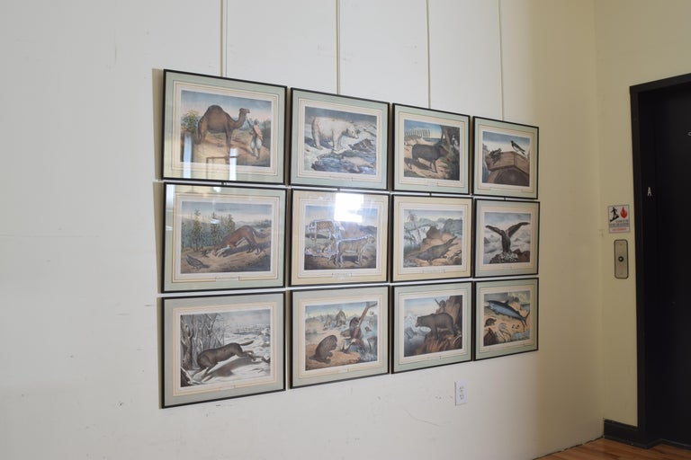Victorian Group of 12 French Hand Colored Framed Engravings of Animals in Habitat For Sale