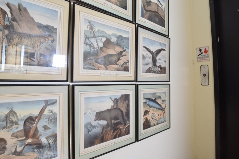 Group of 12 French Hand Colored Framed Engravings of Animals in Habitat In Good Condition For Sale In Atlanta, GA