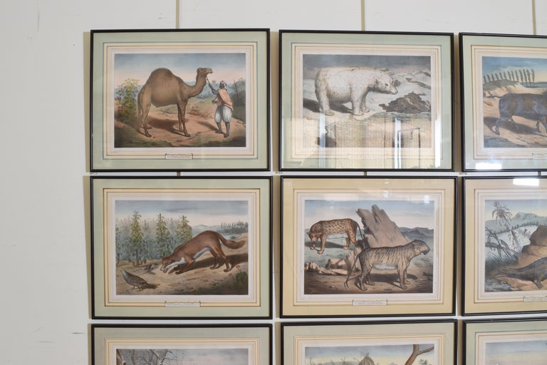 Late 19th Century Group of 12 French Hand Colored Framed Engravings of Animals in Habitat For Sale