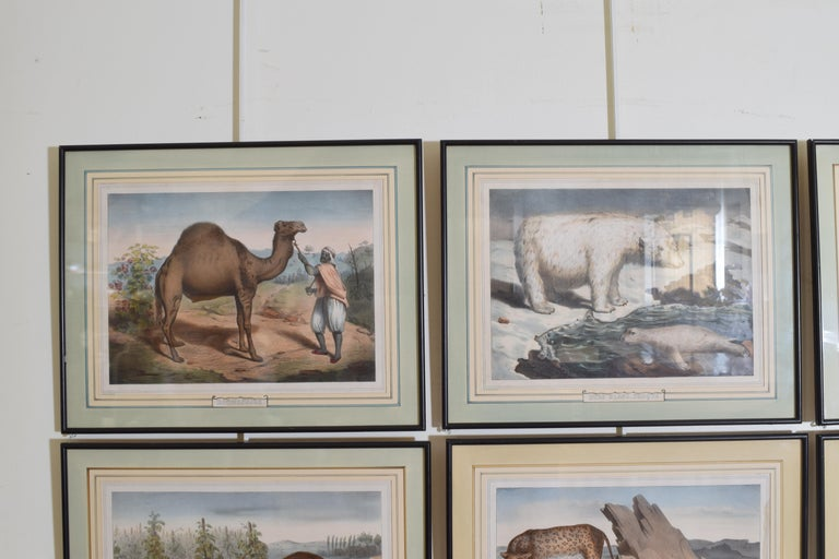Paper Group of 12 French Hand Colored Framed Engravings of Animals in Habitat For Sale