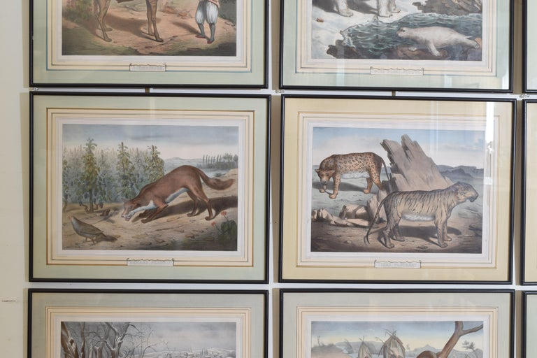 Group of 12 French Hand Colored Framed Engravings of Animals in Habitat For Sale 2