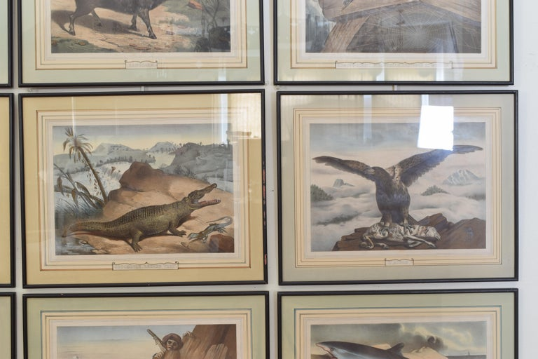 Group of 12 French Hand Colored Framed Engravings of Animals in Habitat For Sale 3