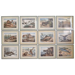 Group of 12 French Hand Colored Framed Engravings of Animals in Habitat