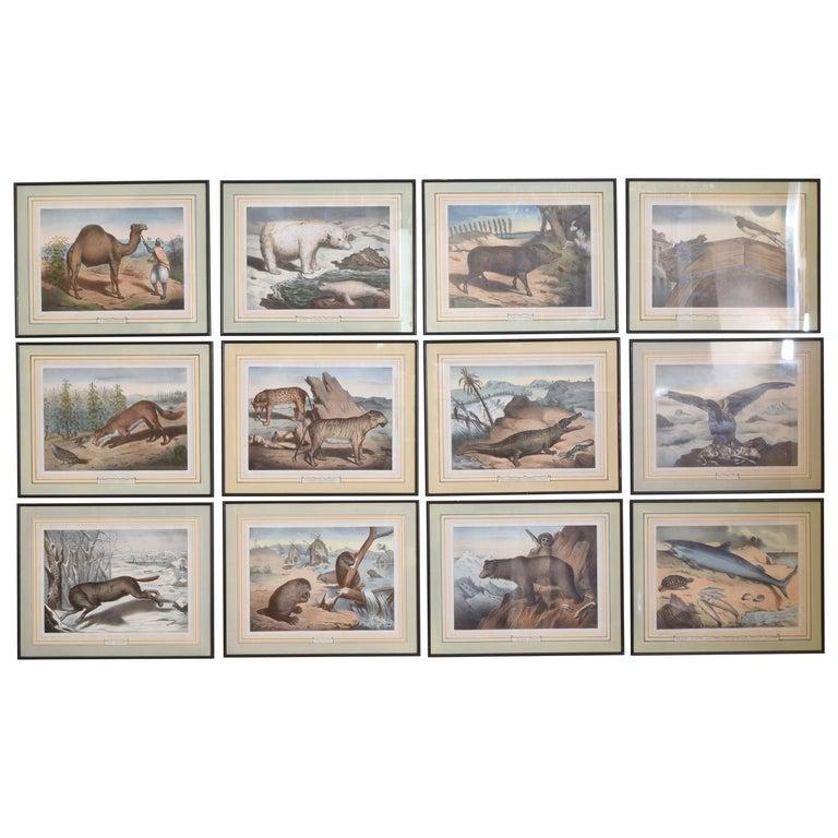 Group of 12 French Hand Colored Framed Engravings of Animals in Habitat For Sale