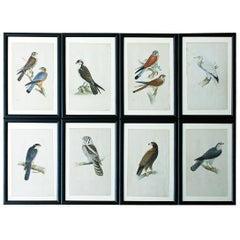 Group of Eight Mid-19th Century Hand-Colored Engravings of British Birds