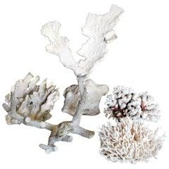 Group of Five Antique Coral Specimens