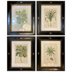 Group of Four Finely Matted and Framed Original Hand Colored Engravings
