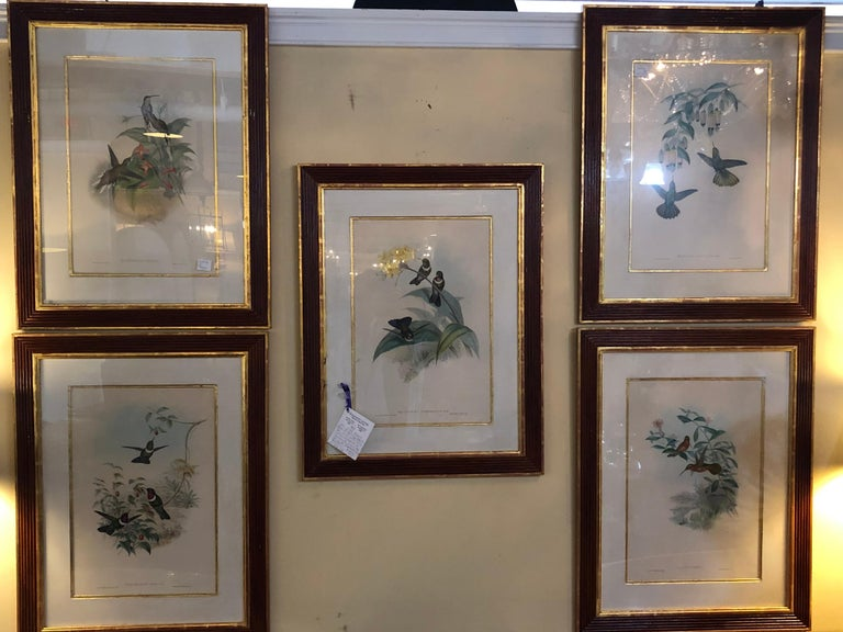 Engraved Group of Nine John Gould 19 Century Copperplate Hand Engravings Framed & Matted For Sale