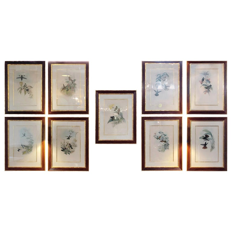 Group of Nine John Gould 19 Century Copperplate Hand Engravings Framed & Matted For Sale