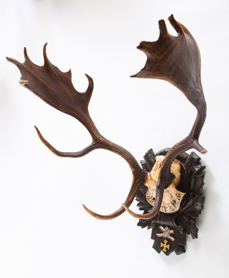Group of Six Swiss 'Black Forest' Moose Antler Trophy Mounts, Early 20th Century For Sale 11
