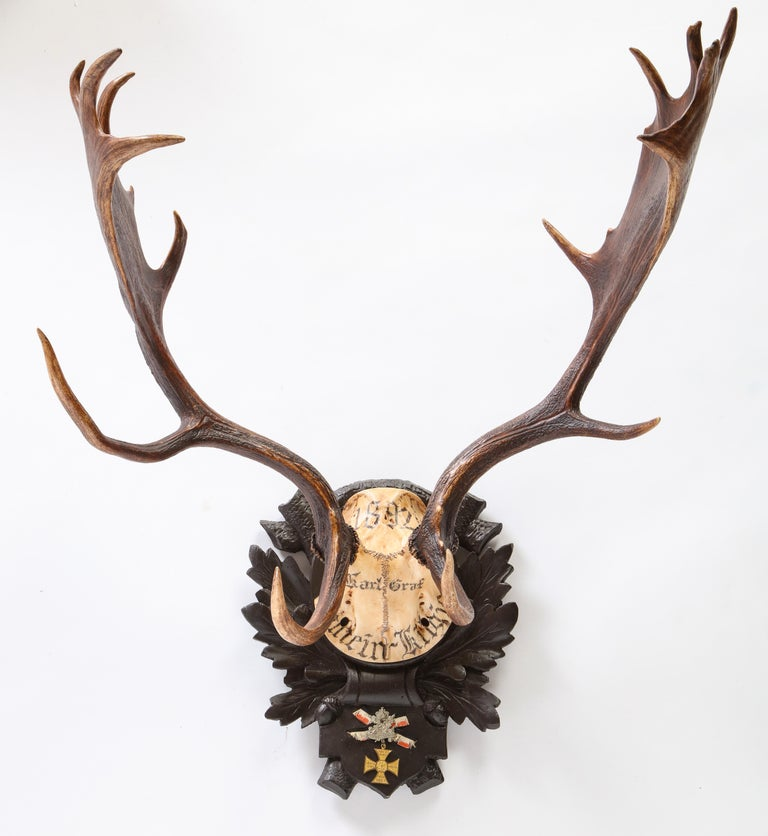 Group of Six Swiss 'Black Forest' Moose Antler Trophy Mounts, Early 20th Century For Sale 9