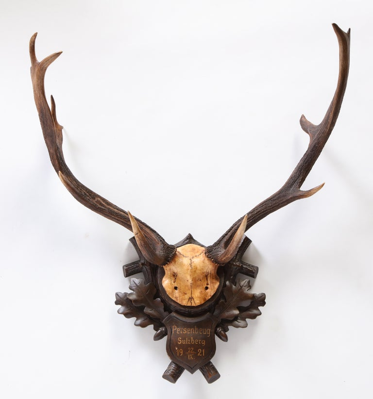 Group of Six Swiss 'Black Forest' Moose Antler Trophy Mounts, Early 20th Century For Sale 12