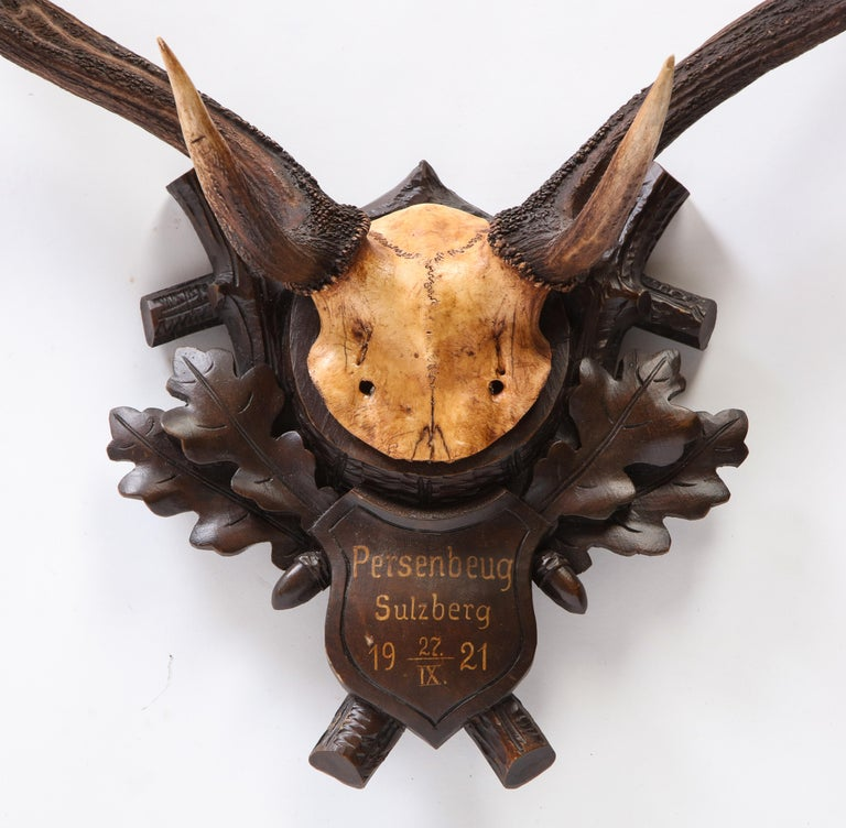 Group of Six Swiss 'Black Forest' Moose Antler Trophy Mounts, Early 20th Century For Sale 13