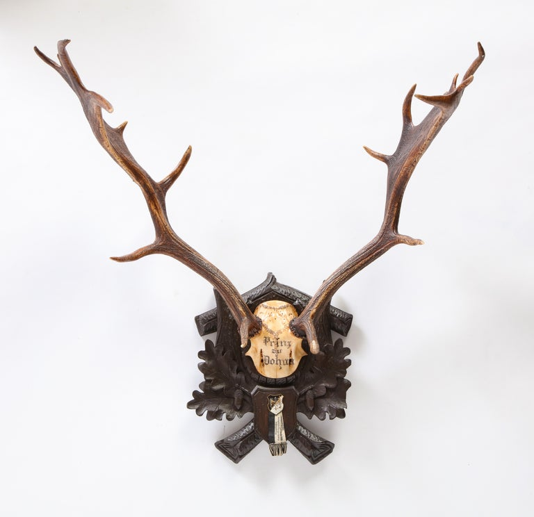Group of Six Swiss 'Black Forest' Moose Antler Trophy Mounts, Early 20th Century For Sale 14