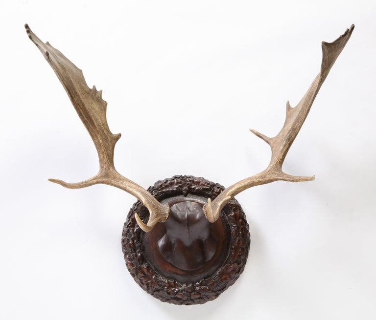 Group of Six Swiss 'Black Forest' Moose Antler Trophy Mounts, Early 20th Century For Sale 16