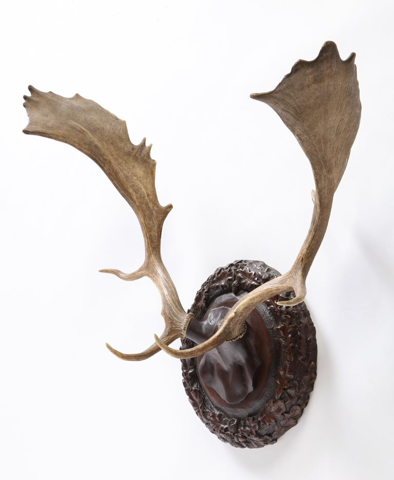 Group of Six Swiss 'Black Forest' Moose Antler Trophy Mounts, Early 20th Century For Sale 17