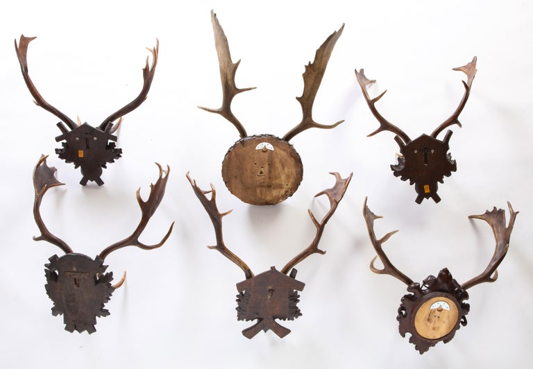 Group of Six Swiss 'Black Forest' Moose Antler Trophy Mounts, Early 20th Century In Good Condition For Sale In New York, NY