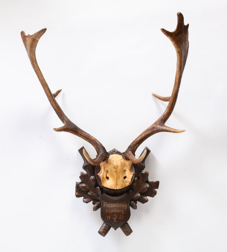 Group of Six Swiss 'Black Forest' Moose Antler Trophy Mounts, Early 20th Century For Sale 6