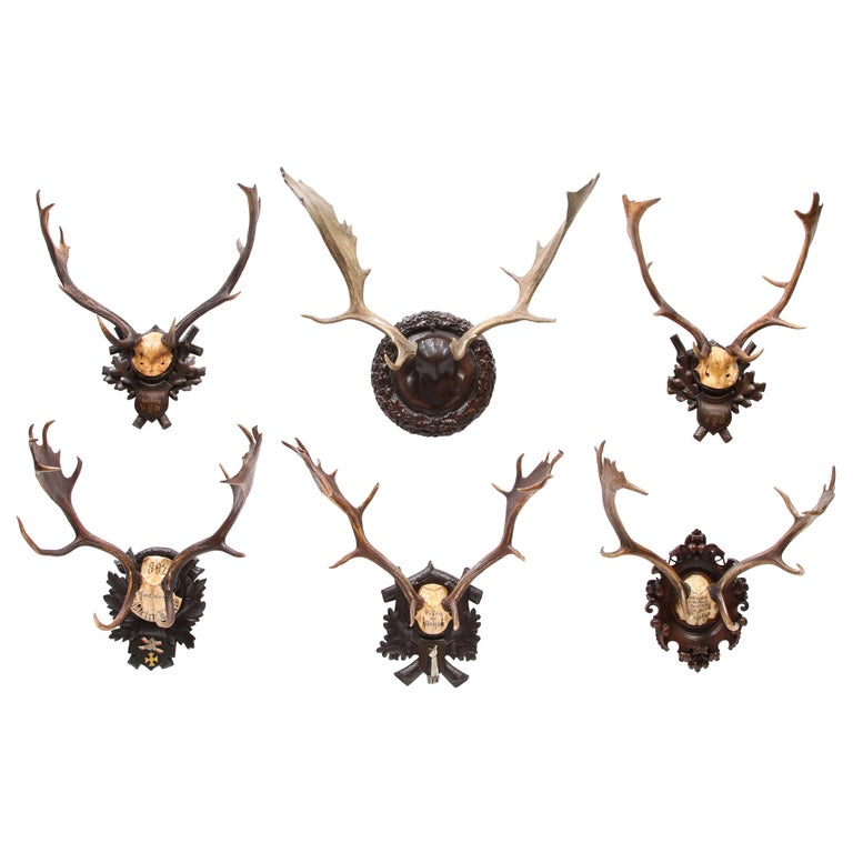 Group of Six Swiss 'Black Forest' Moose Antler Trophy Mounts, Early 20th Century For Sale