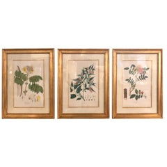 Group of Three Foliage Engravings by Nathaniel Wallich