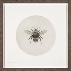 Bumblebee by Guy Allen.  Print from copperplate etching.  Wooden Frame
