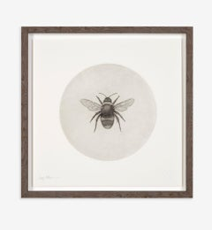 Guy Allen, Bumblebee, Affordable Animal Art, Limited Edition Etching