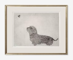 Guy Allen, Dachshund and Butterfly, Affordable Animal Art