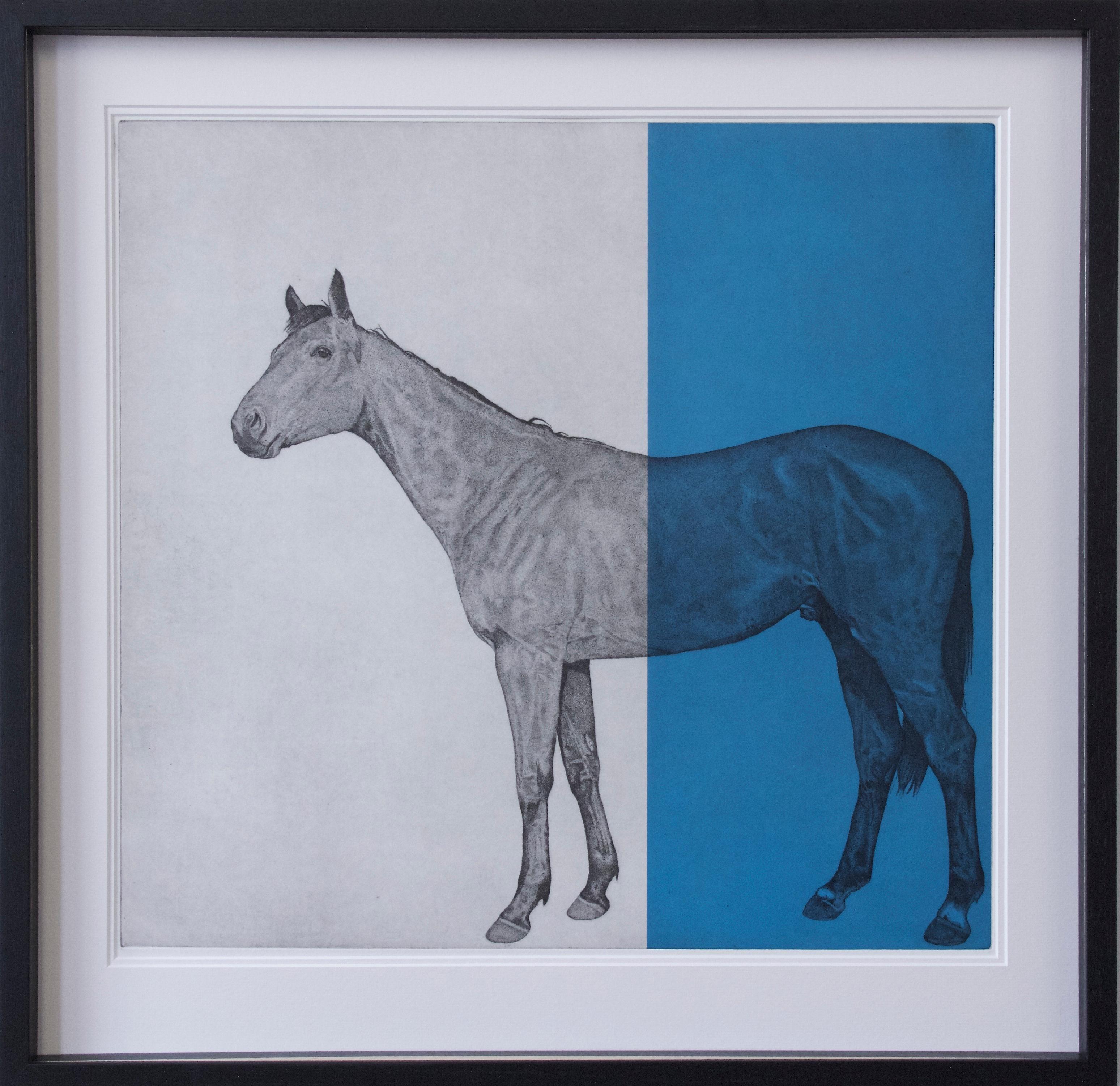 Guy Allen, Horse Study Blue, Bright Art, Etching Print, Contemporary Equine Art