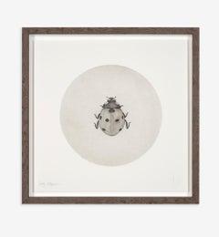 Guy Allen, Ladybird, Animal Etching, Affordable Art