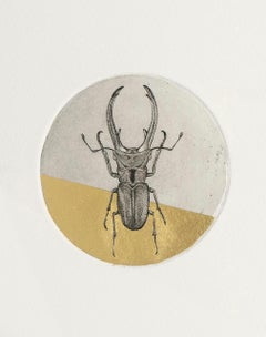 Guy Allen, Stag Beetle Study, Contemporary Animal Etching Print, Gold Art