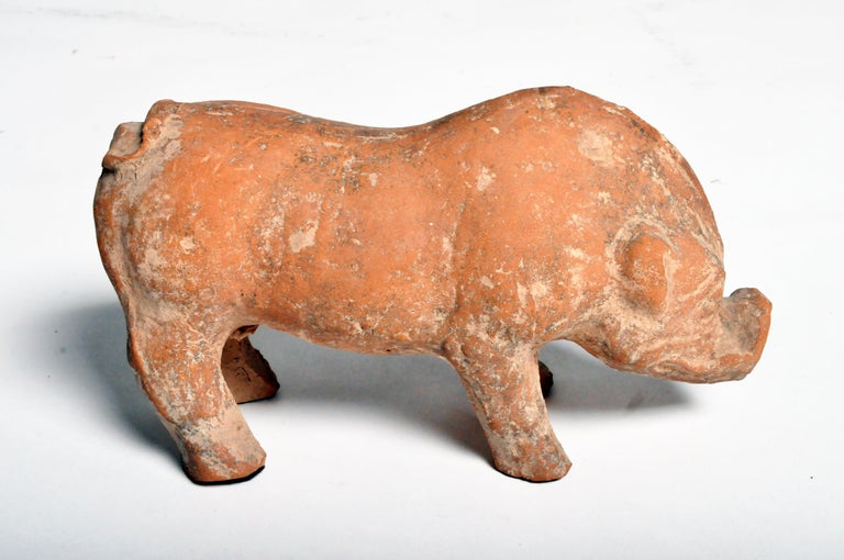 Han Dynasty Figure of a Pig For Sale 4
