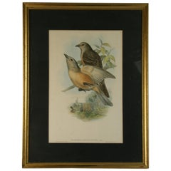Hand Colored Bird Engraving