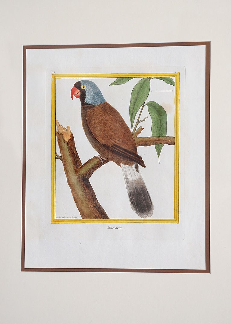 Hand-Colored Bird Engravings by François Nicolas Martinet For Sale 2