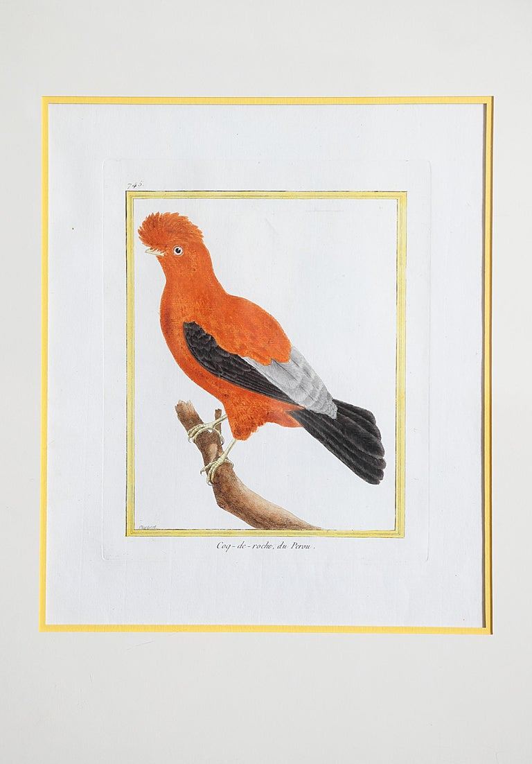 Hand-Colored Bird Engravings by François Nicolas Martinet For Sale 3