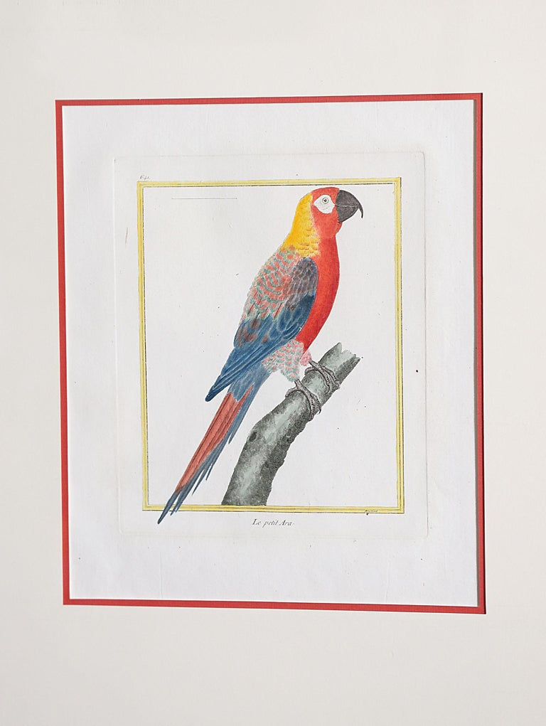Hand-Colored Bird Engravings by François Nicolas Martinet For Sale 4