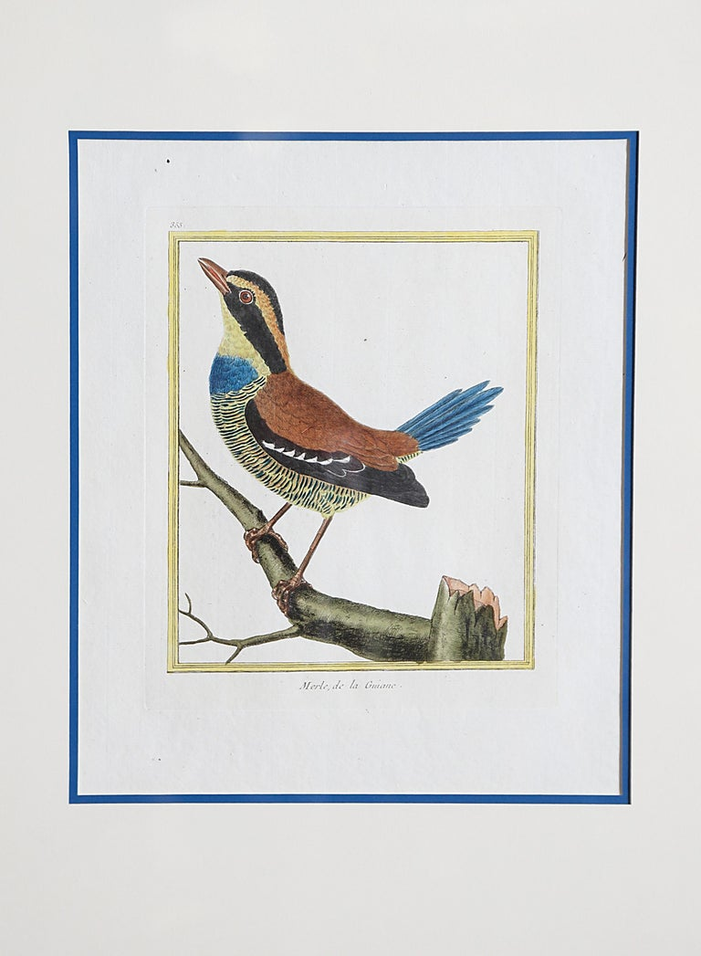 Hand-Colored Bird Engravings by François Nicolas Martinet For Sale 5