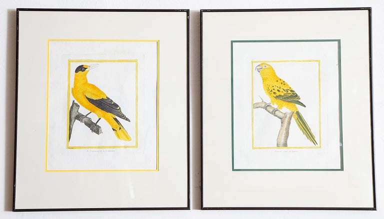 Hand-Colored Bird Engravings by François Nicolas Martinet For Sale 6