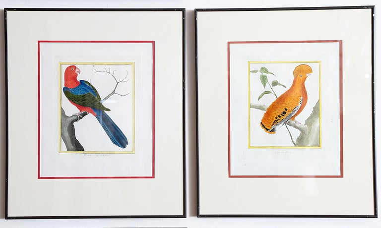 Hand-Colored Bird Engravings by François Nicolas Martinet For Sale 7