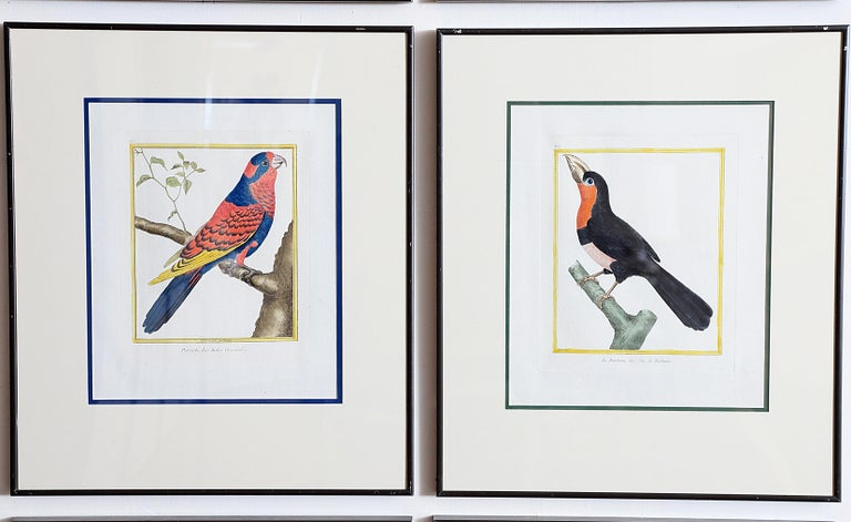 Hand-Colored Bird Engravings by François Nicolas Martinet For Sale 8