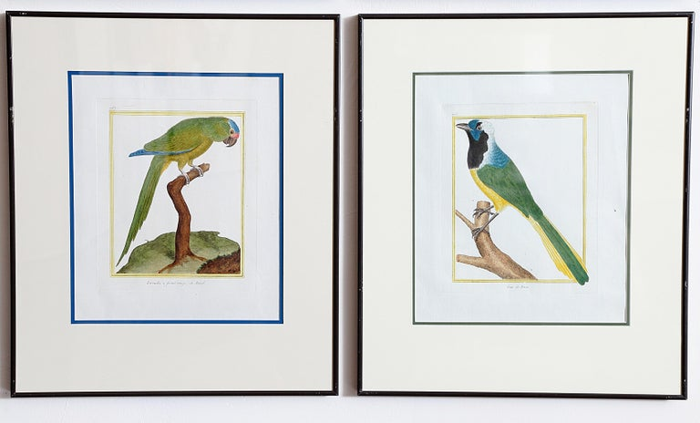 Hand-Colored Bird Engravings by François Nicolas Martinet For Sale 9
