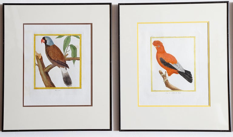 Hand-Colored Bird Engravings by François Nicolas Martinet For Sale 10