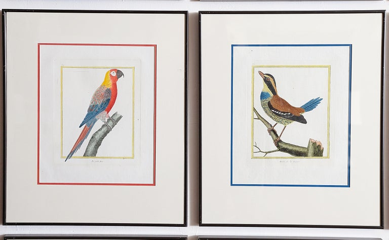Hand-Colored Bird Engravings by François Nicolas Martinet For Sale 11