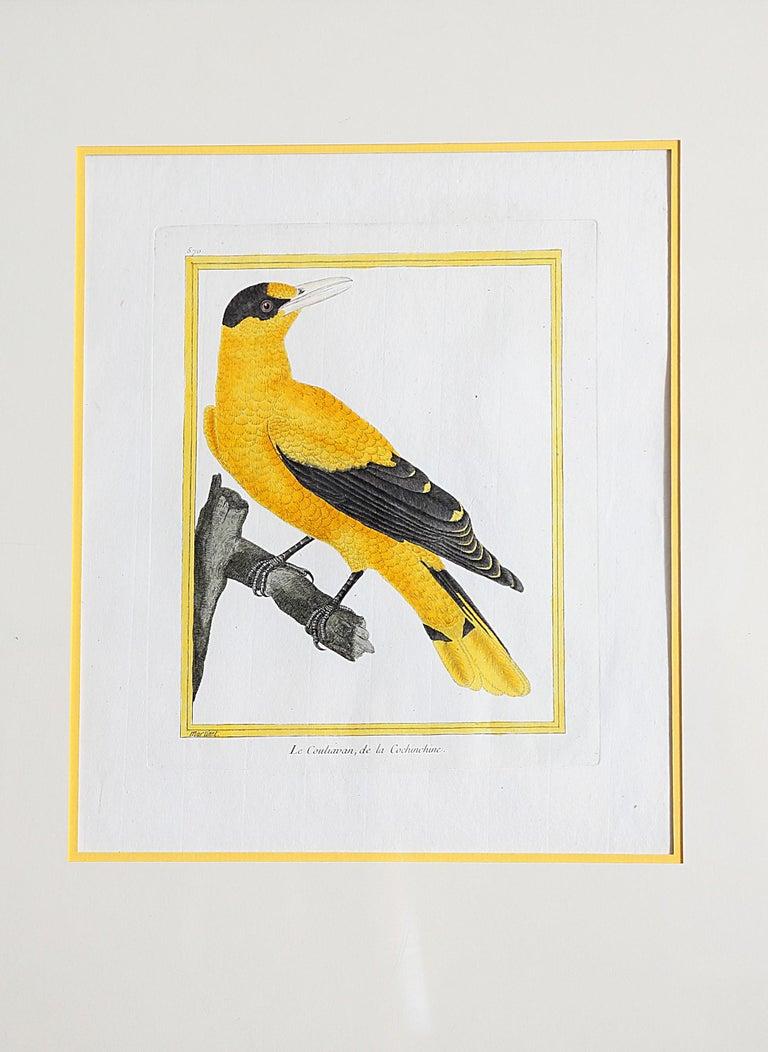 Set / group of 14  François Nicolas Martinet (1731-1804) hand-colored bird prints / engravings from the Comte de Buffon's Histoire Naturelle des Oiseaux  Image size: 10