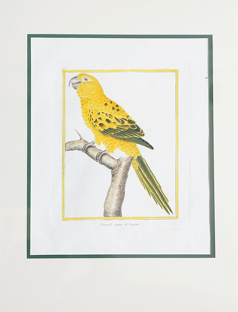 Neoclassical Hand-Colored Bird Engravings by François Nicolas Martinet For Sale