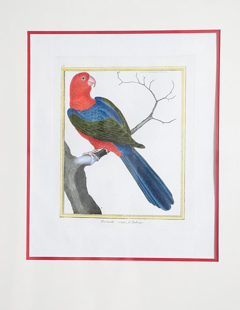 French Hand-Colored Bird Engravings by François Nicolas Martinet For Sale