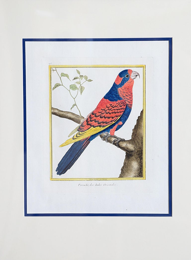Hand-Colored Bird Engravings by François Nicolas Martinet In Good Condition For Sale In Dallas, TX
