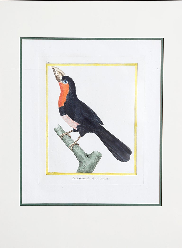 18th Century Hand-Colored Bird Engravings by François Nicolas Martinet For Sale