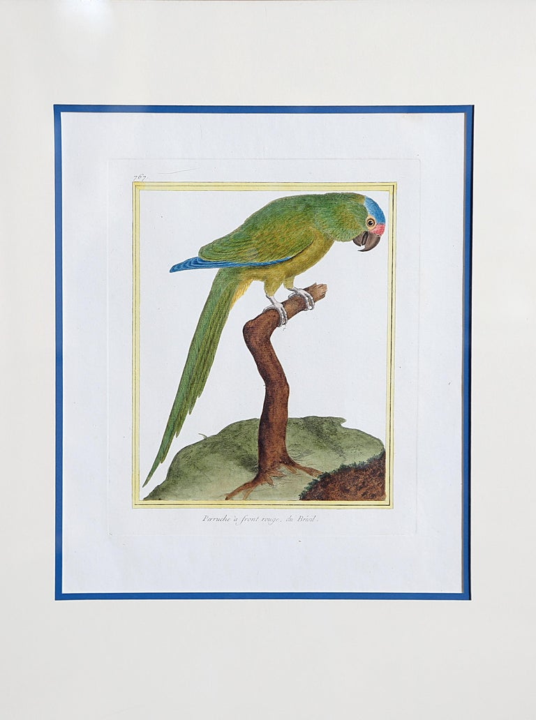 Paper Hand-Colored Bird Engravings by François Nicolas Martinet For Sale